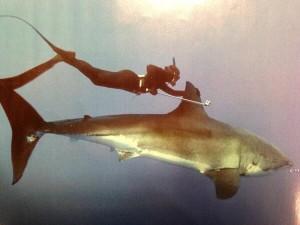 kimi-werner Shark